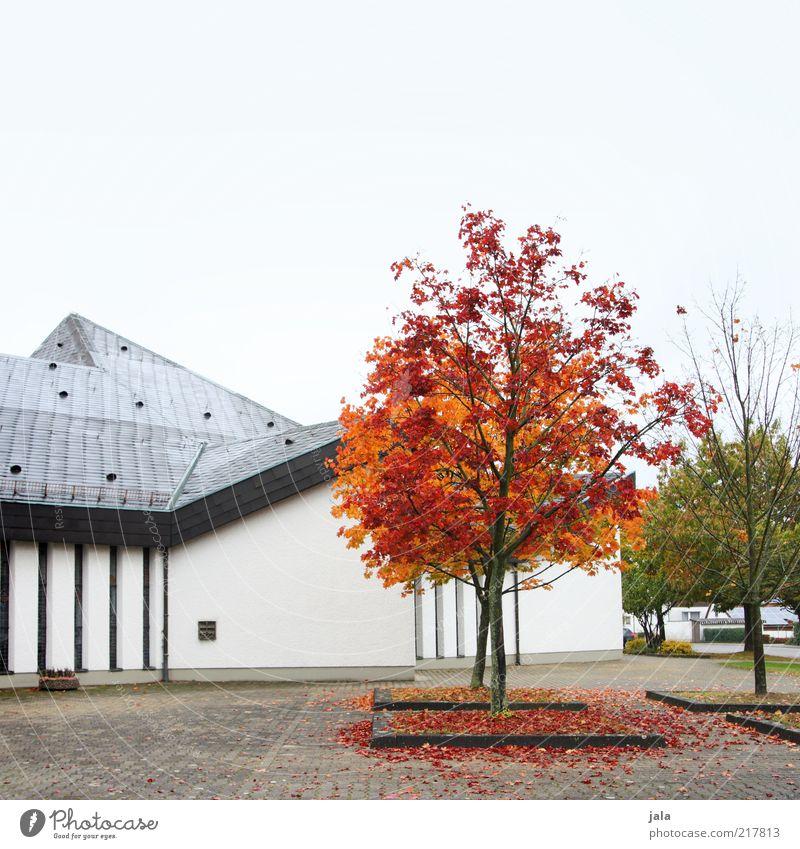 rotlaub Himmel Herbst Baum Haus Platz Bauwerk Gebäude Architektur Mauer Wand Fassade Dach trist grau grün Farbfoto Außenaufnahme Menschenleer Textfreiraum oben