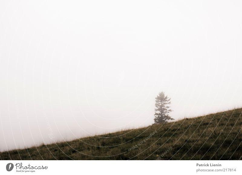Alpensicht Umwelt Natur Landschaft Pflanze Urelemente Luft Himmel Herbst Klima Wetter schlechtes Wetter Nebel Baum Wildpflanze gehen Schwarzwald Einsamkeit hell