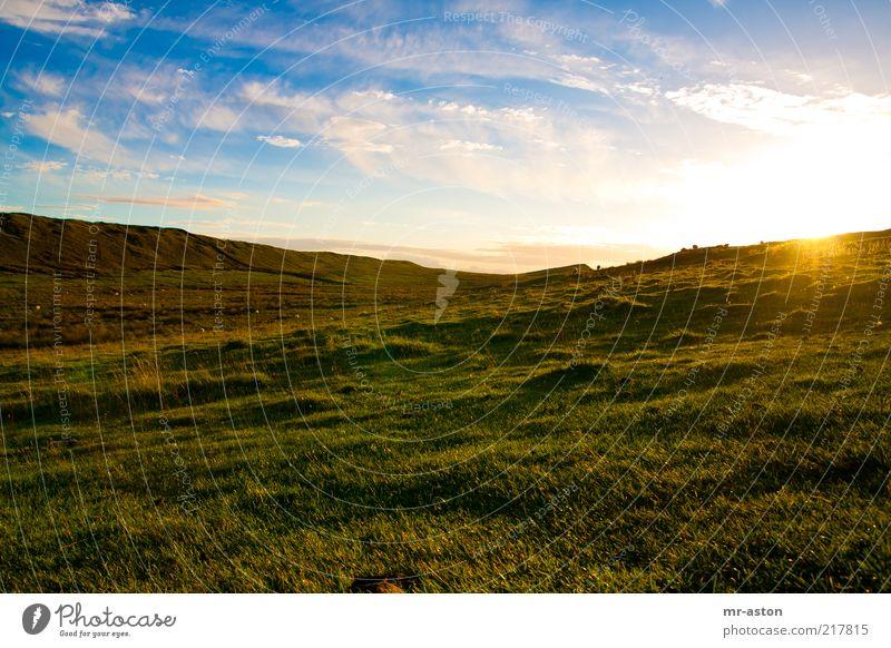 Sonnenuntergang Natur alt Himmel Sonne grün blau Pflanze Wolken Einsamkeit Ferne gelb Wiese Herbst Gras Freiheit Landschaft