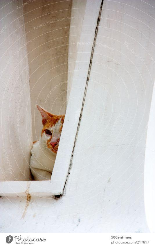 Die versteckte Katze schön ruhig Einsamkeit Tier Erholung Wand Gefühle Fenster Mauer Katze Zufriedenheit Stimmung warten Fassade liegen beobachten