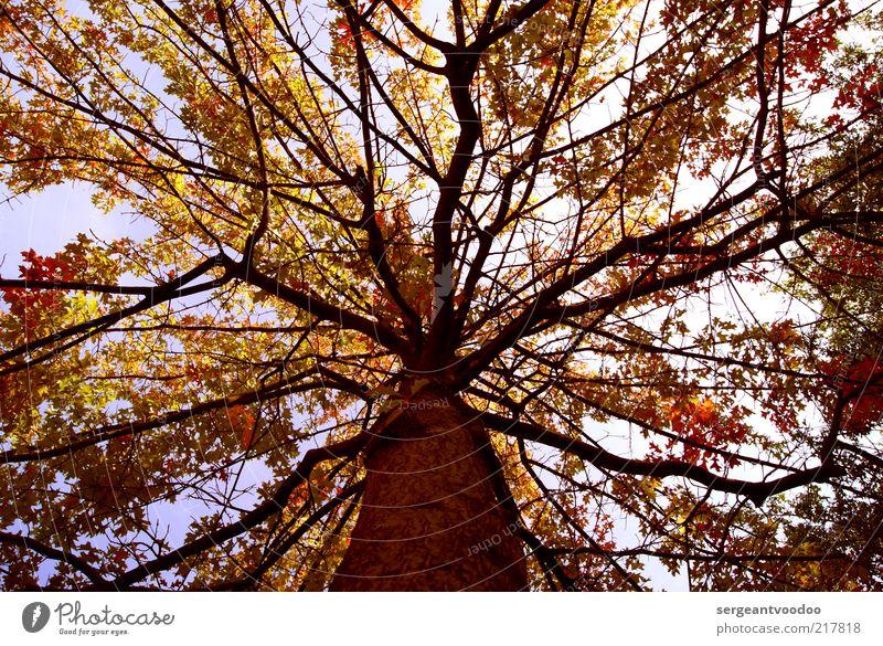 Keinen in der Krone Natur Himmel Baum Pflanze Blatt Wald Herbst Stimmung Wetter Umwelt frei hoch frisch Fröhlichkeit ästhetisch authentisch