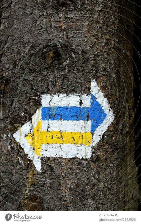 Links oder rechts? wandern Natur Baum Wege & Pfade Wegkreuzung Holz Zeichen Schilder & Markierungen Hinweisschild Warnschild Linie Pfeil blau braun gelb weiß
