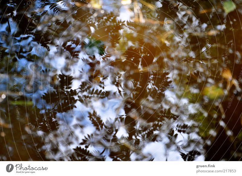 laub im spiegel Natur Pflanze Luft Wasser Himmel Herbst Schönes Wetter Baum Blatt Wald natürlich blau braun gold schwarz geheimnisvoll Pfütze Farbfoto