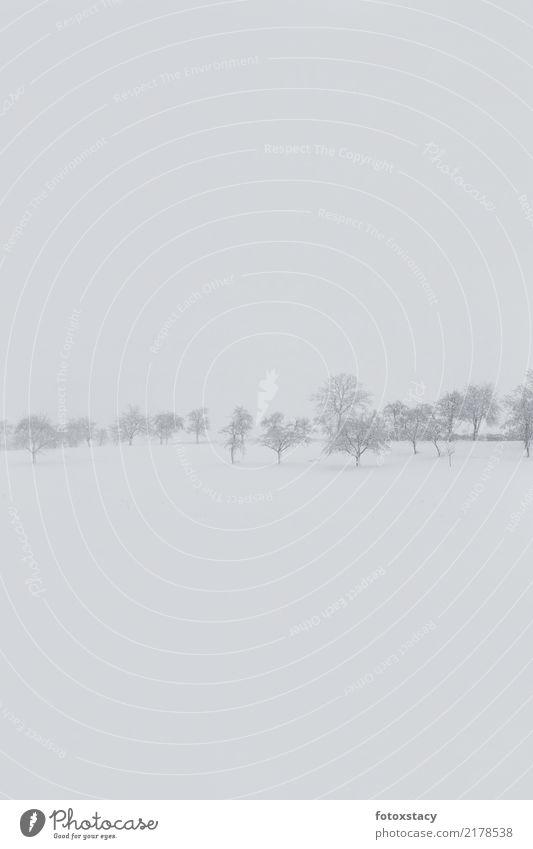Winterlandschaft mit Baumwiese Natur Pflanze weiß Landschaft Erholung ruhig schwarz Umwelt Traurigkeit Wiese Schnee Glück gehen Horizont wandern