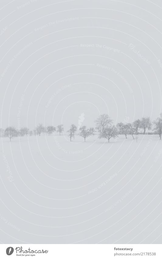 Winterlandschaft mit Baumwiese wandern Umwelt Natur Landschaft Pflanze Wetter Schönes Wetter schlechtes Wetter Eis Frost Schnee Wiese Feld Hügel Erholung