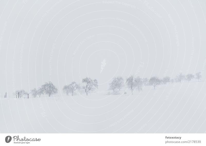 Winterlandschaft mit Baumwiese Umwelt Natur Landschaft Pflanze Wetter Schönes Wetter schlechtes Wetter Eis Frost Schnee Wiese Hügel Erholung frieren gehen
