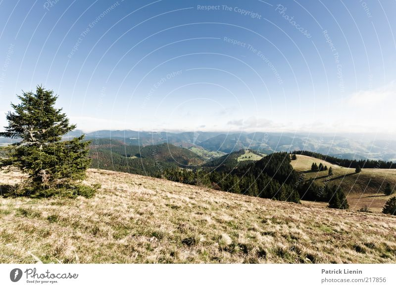 Weitsicht Natur schön Baum blau Pflanze Ferien & Urlaub & Reisen Ferne Wald Herbst Gras Berge u. Gebirge Freiheit Landschaft Luft Wetter Umwelt