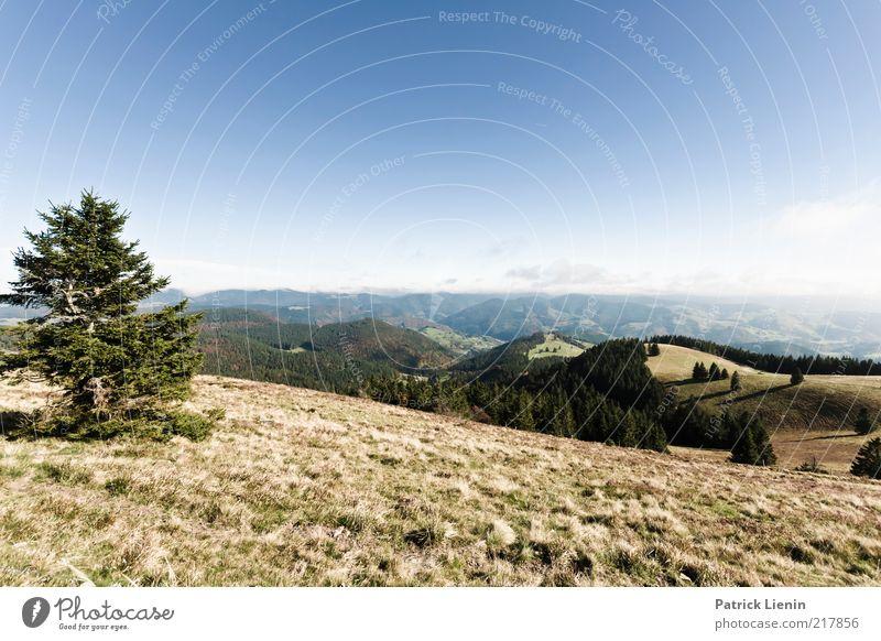 Weitsicht Umwelt Natur Landschaft Pflanze Urelemente Luft Wolkenloser Himmel Herbst Klima Wetter Schönes Wetter Baum Gras Wald Hügel Berge u. Gebirge Blick