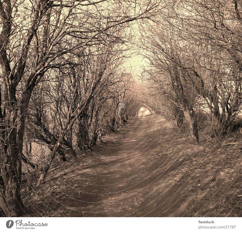 Lichtgang England Baum Fußweg wandern Großbritannien Verkehr yorkshire moors sephia Schatten