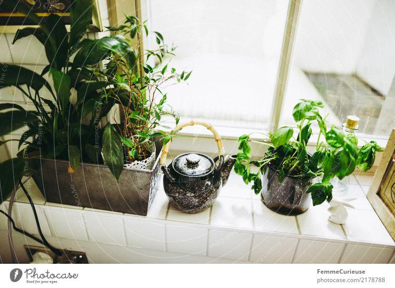 Home_04 Pflanze Nutzpflanze Topfpflanze Häusliches Leben Kräuter & Gewürze Kräutergarten Basilikum Teekanne Fensterbrett Fliesen u. Kacheln Küche