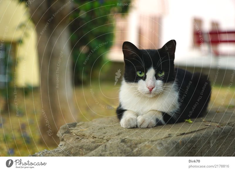 Cool Cat Katze Stadt Baum Erholung Haus Tier ruhig Wand Mauer Garten Stein Fassade Park frei liegen authentisch