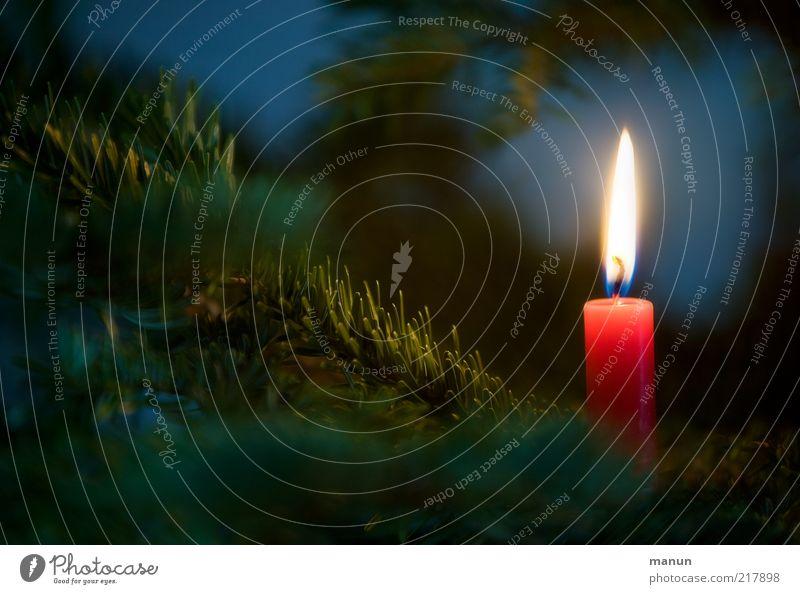 ...ein Lichtlein brennt Weihnachten & Advent rot Feste & Feiern Stimmung leuchten Zeichen Hoffnung Kerze Glaube Weihnachtsbaum Vorfreude Erwartung festlich friedlich Weihnachtsdekoration Kerzenschein