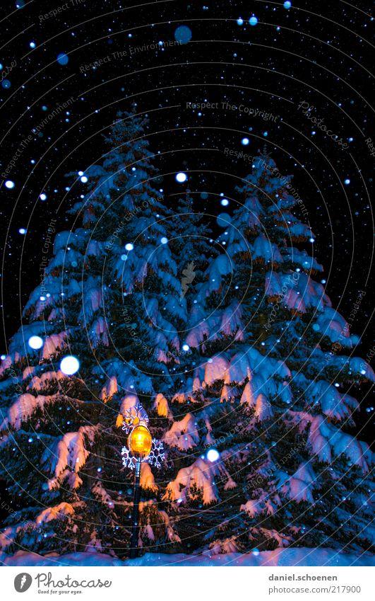 O Tannenbaum Winter Schnee Klima Eis Frost Schneefall Baum blau Schneeflocke Nacht Blitzlichtaufnahme Schatten Menschenleer Reflexion & Spiegelung dunkel