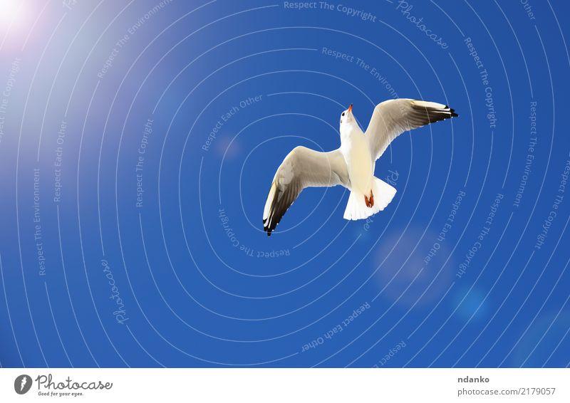 weiße Möwe Freiheit Sommer Sonne Natur Tier Himmel Vogel Fliege 1 Bewegung frei wild blau Feder schweben Hintergrund Etage Tierwelt Flügel Meeresvogel Höhe Raum