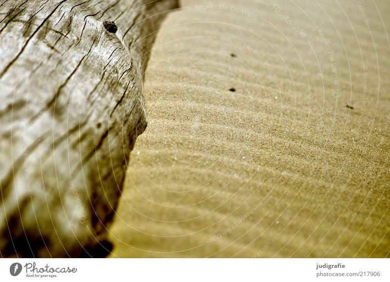 Weststrand Natur Baum Strand Holz Sand Wärme Zufriedenheit Küste Umwelt liegen natürlich Ostsee Meer wellig bräunlich Wellenform