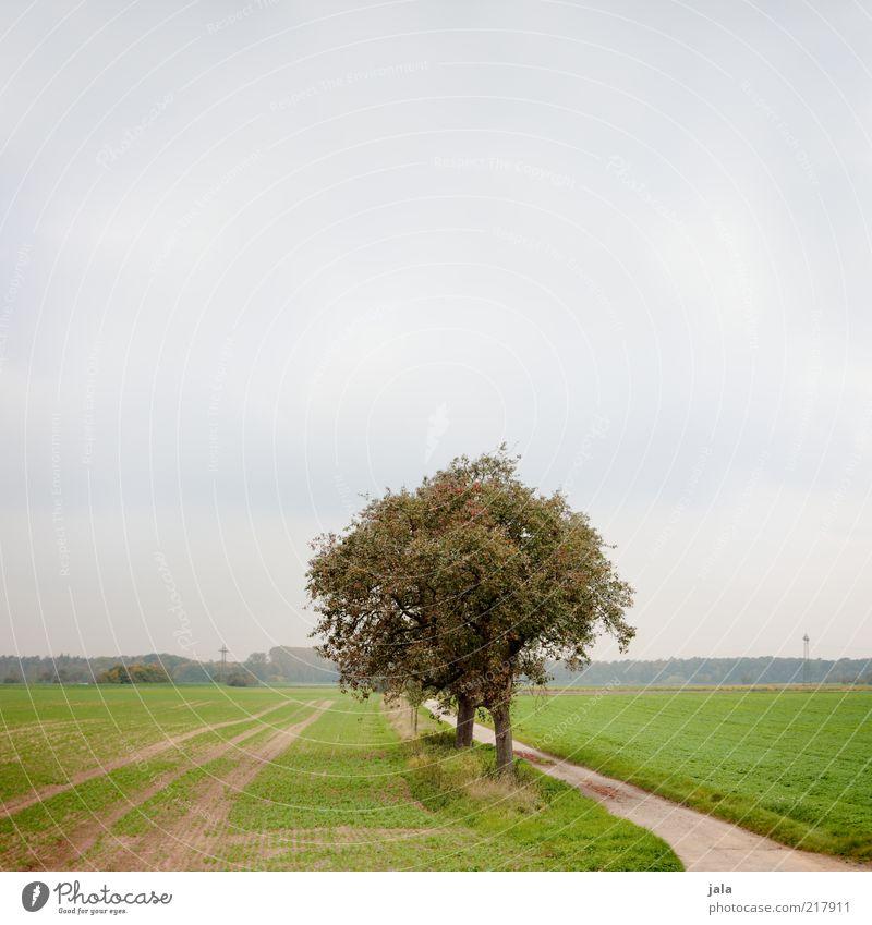 feld und flur Umwelt Natur Landschaft Himmel Herbst Pflanze Gras Feld grau grün Farbfoto Außenaufnahme Menschenleer Hintergrund neutral Tag Wege & Pfade Baum