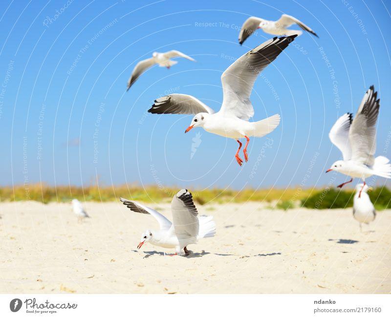 weiße Möwen am Strand Freiheit Sommer Sonne Meer Menschengruppe Natur Landschaft Tier Sand Himmel Küste Vogel frei natürlich wild blau Fliege sonnig Feder