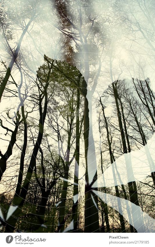 Herbst Himmel Natur Ferien & Urlaub & Reisen Pflanze grün Baum Landschaft Tier Blatt Wald Tourismus Stimmung wandern Park ästhetisch Blühend