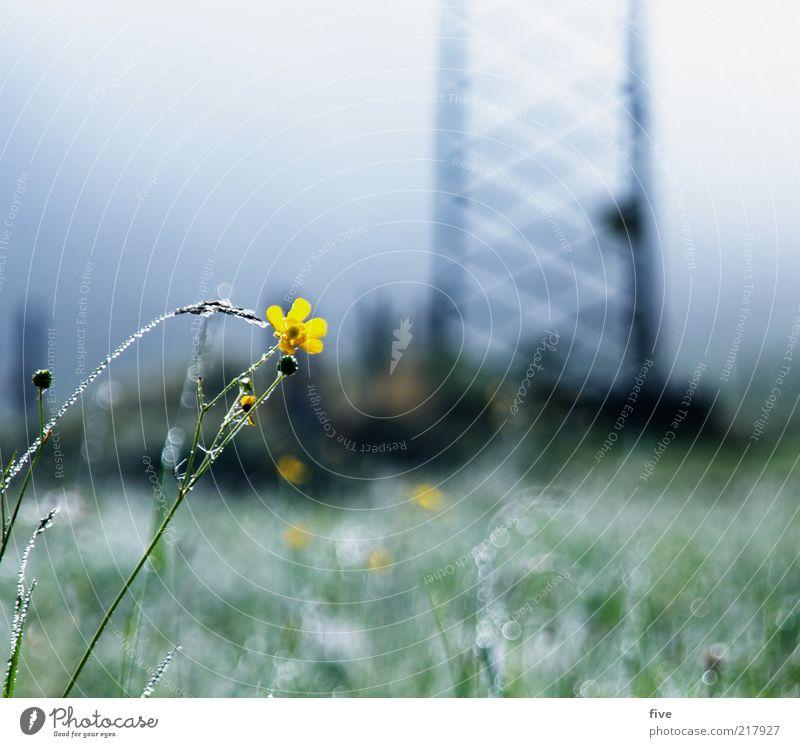 going am wilden kaiser Natur Himmel Blume Pflanze gelb kalt Wiese Herbst Blüte Gras Nebel Umwelt nass Wassertropfen Alpen feucht