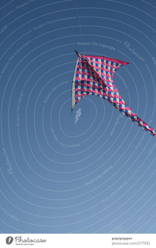huiiiiii blau Sommer Freude Bewegung Holz Luft Wind fliegen frei Geschwindigkeit ästhetisch Freizeit & Hobby Kunststoff positiv Froschperspektive