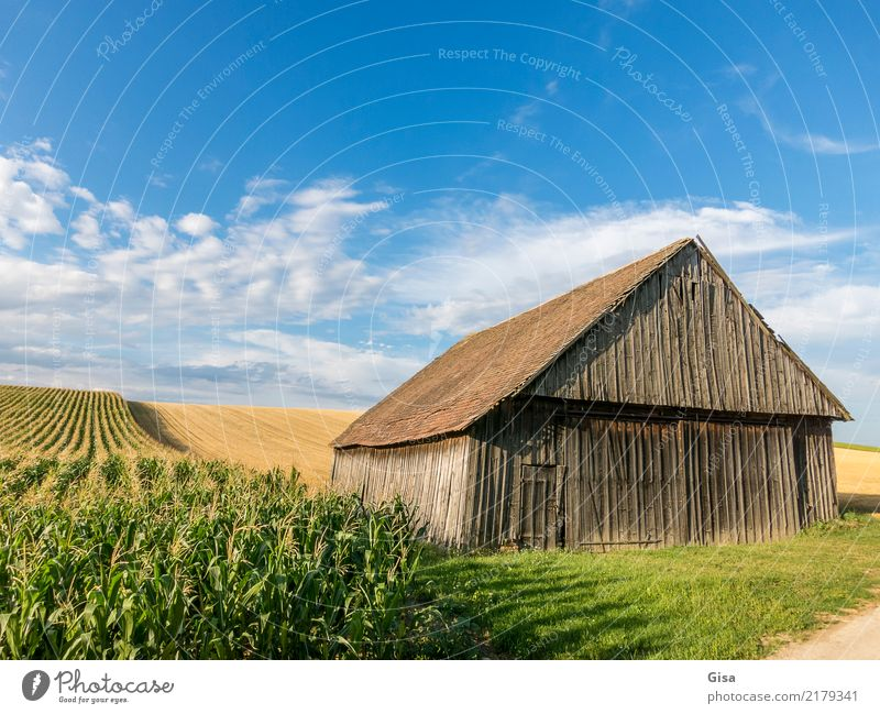 Scheune nimmt spätes Sonnenbad Natur Ferien & Urlaub & Reisen alt blau Sommer grün Landschaft Wolken Tourismus braun Ausflug wandern Feld gold Kultur