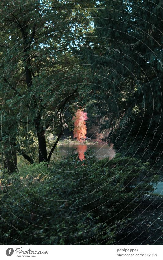 herbstglühen Natur Wasser Baum Sonne grün Pflanze rot Wald Herbst See Park Landschaft glänzend Blühend Teich