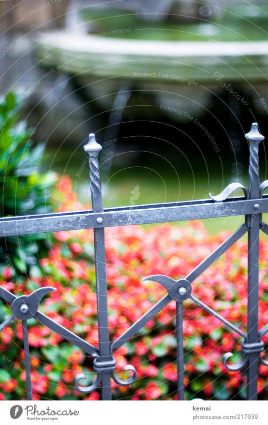 Eingezäunte Heinzelmännchen Zaun Metallzaun Pflanze Wasser Wassertropfen Blume Köln Sehenswürdigkeit Denkmal Brunnen alt nass grün rot fließen Begrenzung