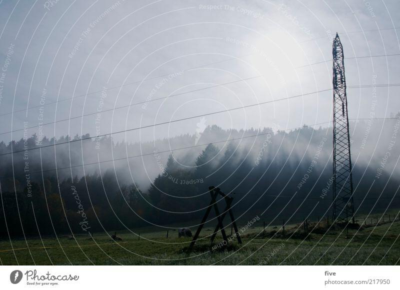 going am wilden kaiser Umwelt Natur Landschaft Himmel Wolken Herbst Wetter Nebel Pflanze Baum Grünpflanze Wiese Feld Wald Hügel Alpen kalt Strommast Farbfoto