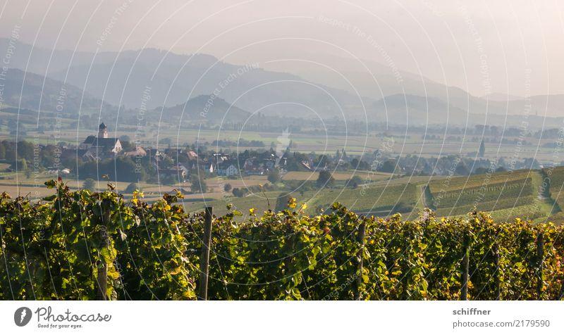 Toskana Umwelt Natur Landschaft Pflanze Herbst Schönes Wetter Grünpflanze Nutzpflanze Feld Hügel Schwarzwald schön ruhig Dunst Nebel Landschaftsformen Dorf