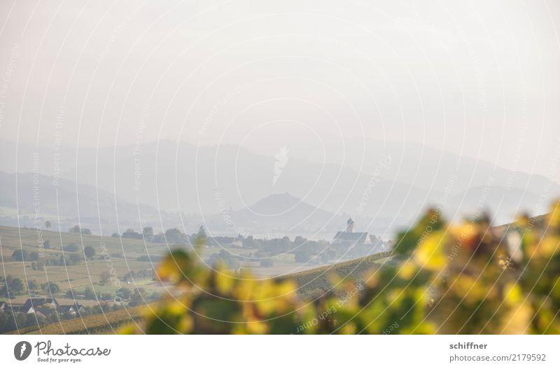 Genug des Weines Landschaft Herbst Schönes Wetter Hügel Berge u. Gebirge Dorf gelb grün Dunst Nebel Ferne Weinberg Weinblatt Kulturlandschaft Schwarzwald