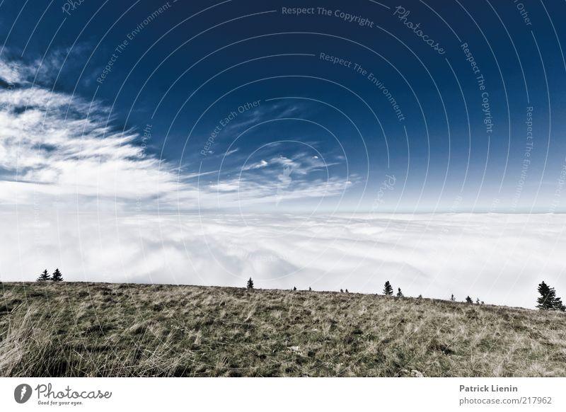 overcast Natur Himmel Baum blau Pflanze Ferien & Urlaub & Reisen ruhig Wolken kalt Wiese Herbst Berge u. Gebirge grau Landschaft Luft Stimmung