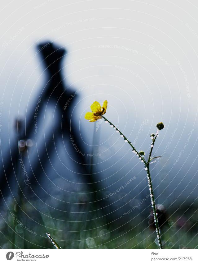 blumenfoto für ad rian Natur Himmel Blume Pflanze Blatt gelb kalt Wiese Herbst Gras Park Landschaft Nebel Wetter Umwelt Wassertropfen