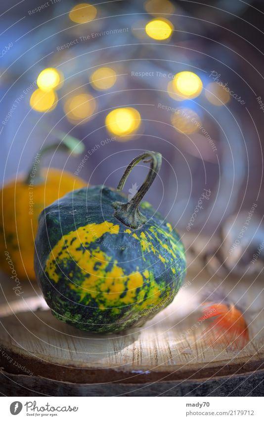 Herbstdekoration mit kleinen Kürbisen und Lichtern Gemüse Vegetarische Ernährung Halloween Finger Holz frisch gelb Leuchtdiode Herbstlaub Herbstsaison