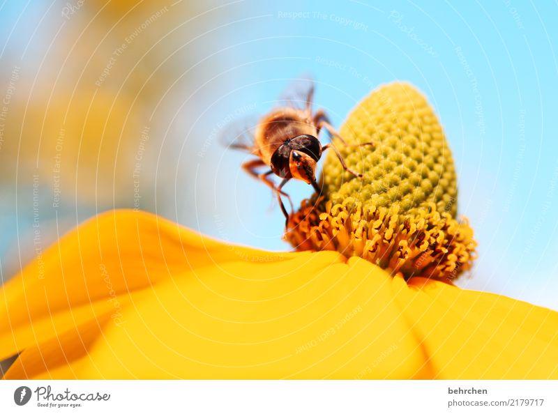 ein platz an der sonne Himmel Natur Pflanze Sommer schön Baum Tier Blatt Wärme gelb Blüte Wiese klein Garten fliegen Park