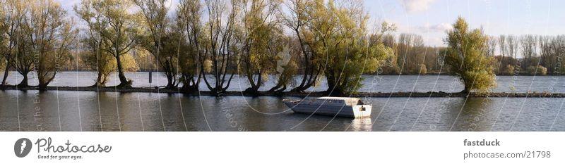 Rheinauen (Panorama) Wasser Baum Wasserfahrzeug Deutschland Fluss Rhein Rheingau