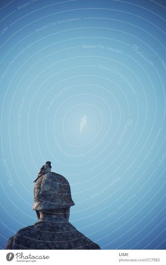 un moineau de vachères Skulptur Statue Denkmal Tier Wildtier Vogel Flügel Spatz 1 blau braun grau Stein Farbfoto Außenaufnahme Detailaufnahme Menschenleer