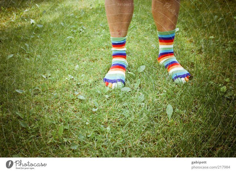 ringelsöckchen Mensch Mann Leben Wiese Gras Fuß Beine Mode Erwachsene maskulin ästhetisch Behaarung Rasen einzigartig Lebensfreude