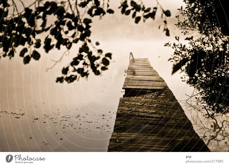 das ende vom anfang Natur Wasser ruhig Blatt Herbst Holz Nebel Umwelt nass frisch Sträucher Ast Steg Seeufer Anlegestelle Leiter