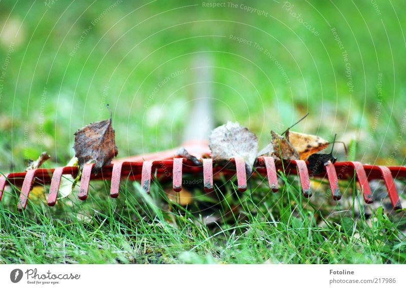 Arbeitspause Natur grün Pflanze rot Blatt Wiese Herbst Gras Garten Umwelt natürlich Urelemente Herbstlaub Froschperspektive Besenstiel Forke