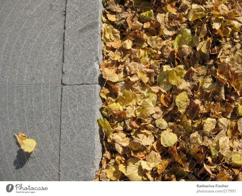 ...nicht angepasst ! Blatt gelb Straße Herbst grau Stein Wege & Pfade braun Straßenverkehr Beton Ordnung Bürgersteig Jahreszeiten Herbstlaub Bordsteinkante