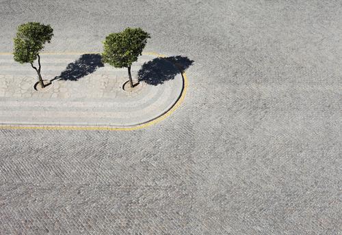 Umweltschutz? Kunst ästhetisch Zufriedenheit Baum 2 grün Park Kopfsteinpflaster grau Beton Natur Orangenbaum Design harmonisch Kontrast Gegenteil Widerspruch