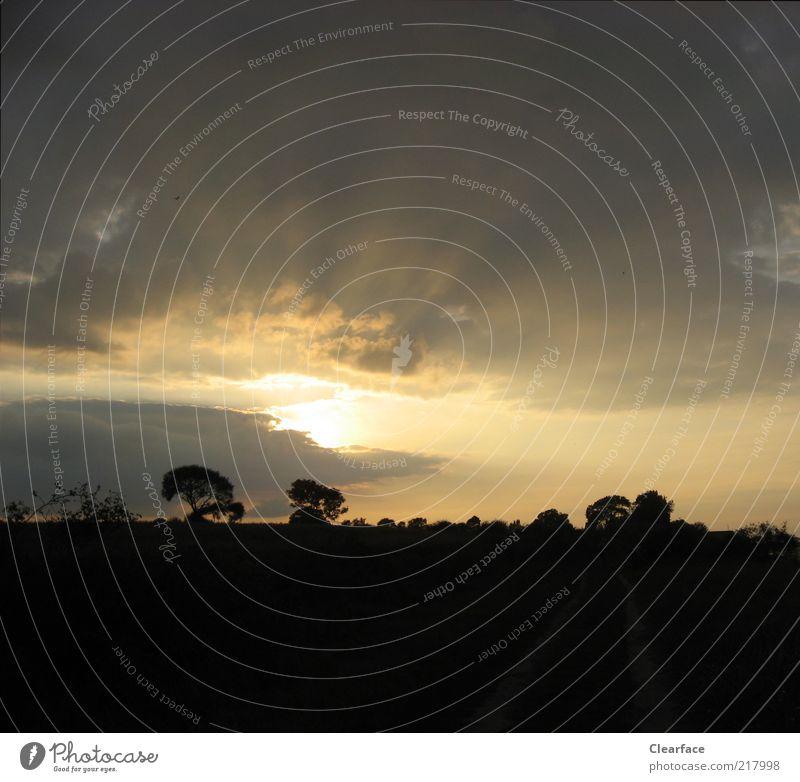 etzssrt Natur Landschaft Himmel Baum dunkel Dänemark Farbfoto Außenaufnahme Menschenleer Textfreiraum unten Abend Kontrast Silhouette Sonnenaufgang