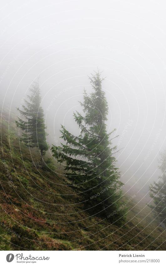 stormy weather Umwelt Natur Landschaft Pflanze Urelemente Luft Wolken Herbst Klima Klimawandel Wetter schlechtes Wetter Wind Nebel Regen Baum Wald Hügel