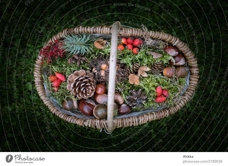 Herbstkörbchen Natur Pflanze Tier Blatt Umwelt natürlich wild Dekoration & Verzierung Moos Korb Oktober Wildpflanze Kastanie Hagebutten September