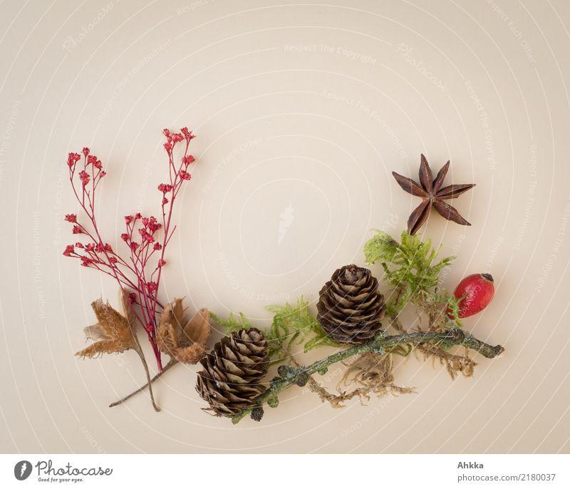 Herbstdekoration Umwelt Natur Pflanze Moos Wildpflanze Tannenzapfen Hagebutten Sternanis Buchecker Dekoration & Verzierung Geschenk Gruß natürlich braun grün