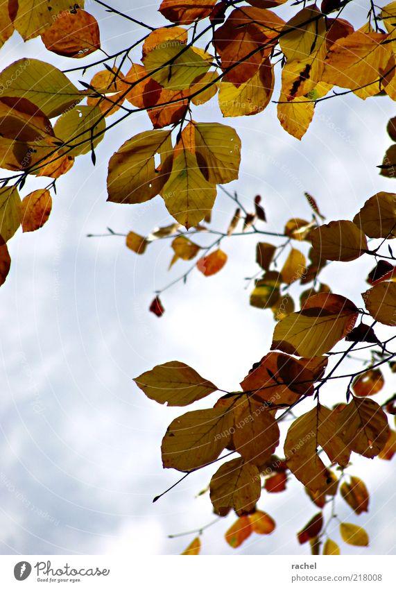 Change of Seasons Herbst Blatt hängen Wandel & Veränderung Jahreszeiten Wechseln Herbstlaub herbstlich Laubbaum Waldspaziergang Wolken Buche mehrfarbig