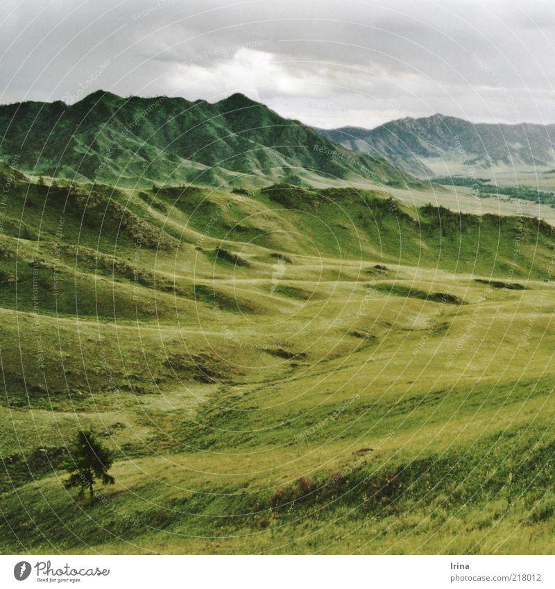 Altai Natur Landschaft Urelemente Himmel Baum Gras Berge u. Gebirge Tal Ongudai Russland Altai Gebirge grün Ferne erhaben Naturliebe abstrakt Grasland Gipfel