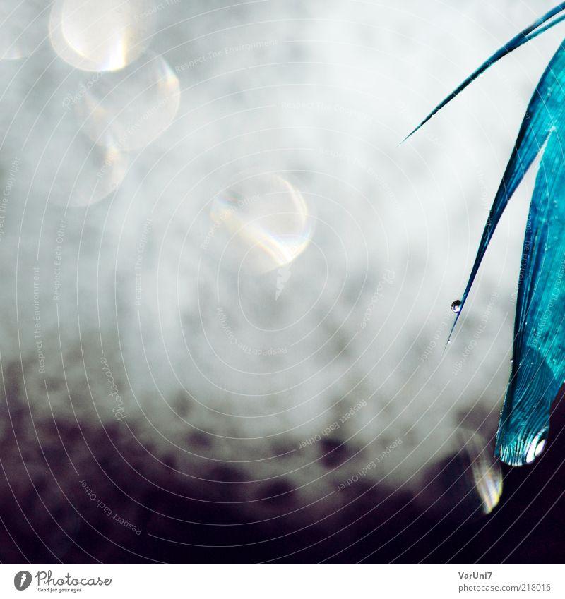 touching Wasser schön weiß blau träumen nass modern ästhetisch nah Tropfen Feder violett einzigartig fantastisch außergewöhnlich abstrakt