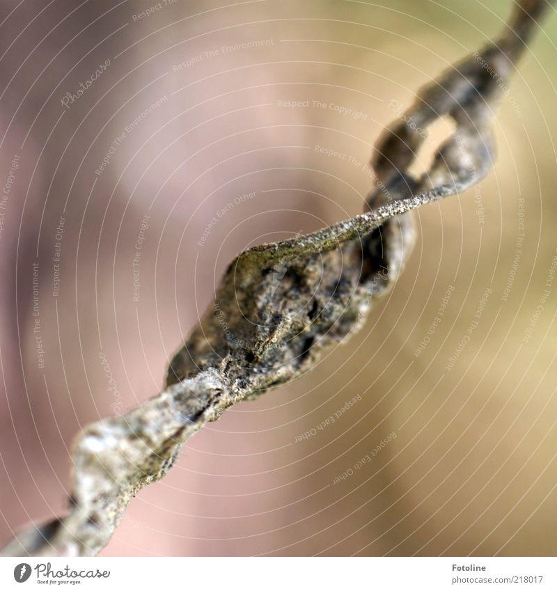 Unfallfoto Umwelt Natur Pflanze Herbst Blatt Wildpflanze natürlich braun vertrocknet Farbfoto Gedeckte Farben Außenaufnahme Nahaufnahme Makroaufnahme