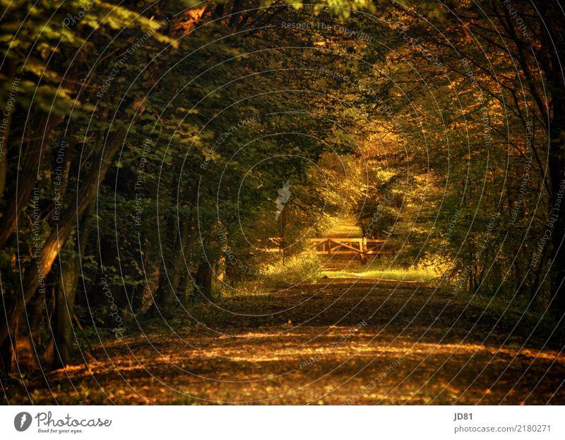 Märchenwald Umwelt Natur Landschaft Tier Erde Sonnenaufgang Sonnenuntergang Sonnenlicht Herbst Schönes Wetter Wald Park ästhetisch authentisch fantastisch